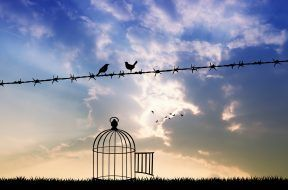 free birds on wire